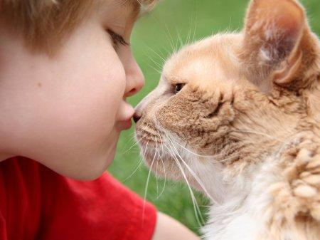Может ли быть лишай кошачий у человека?