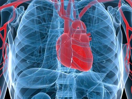 Колит сердце. Причины возникновения и лечение.