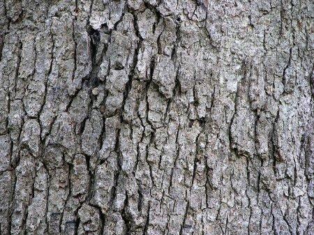 Помогает ли кора дуба при поносе?